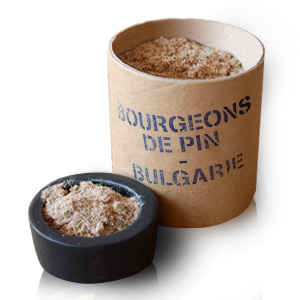 Plante brute Bourgeon de pin (Pinus)